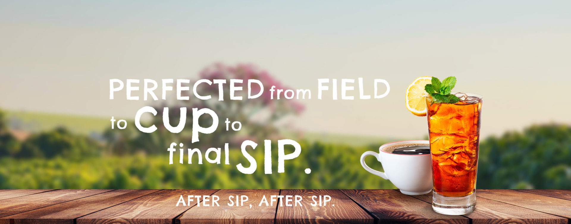 Perfect Tea from Field to Cup